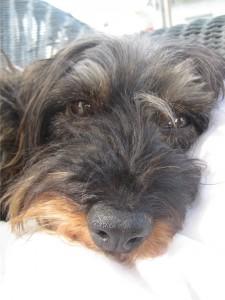 Schulhund Frieda