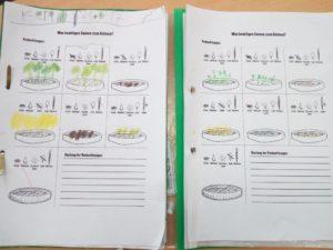 Kresse - Was brauchen Pflanzen zum Wachsen? - Paul-Dohrmann-Schule Dortmund