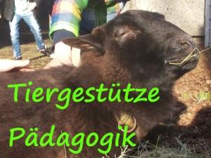 Tiergestütze Pädagogik